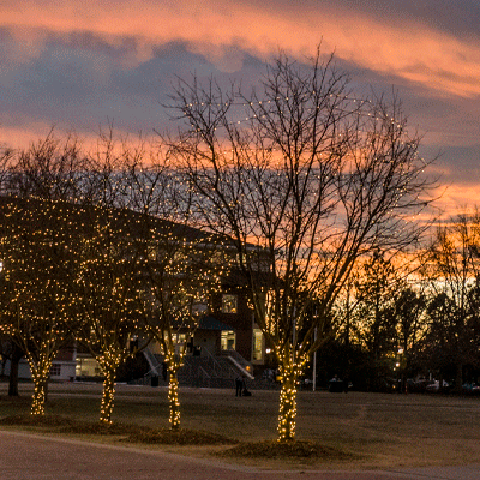 lights on trees in the quad at sunset