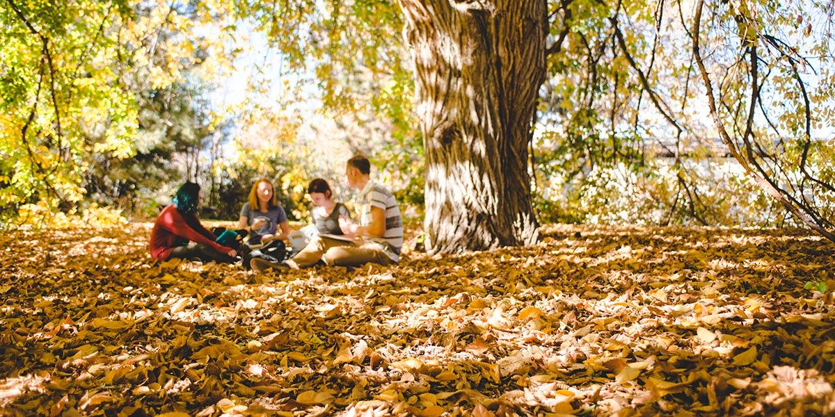 students study under willow tree in fall