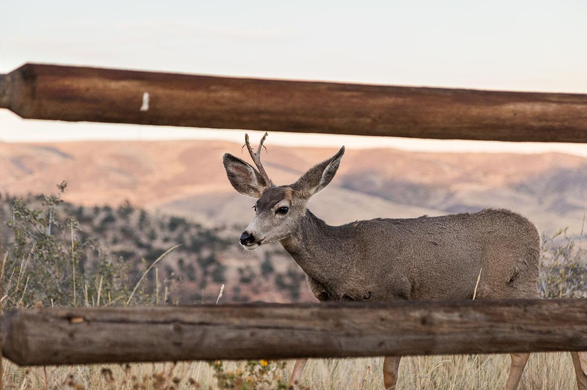 deer exploring
